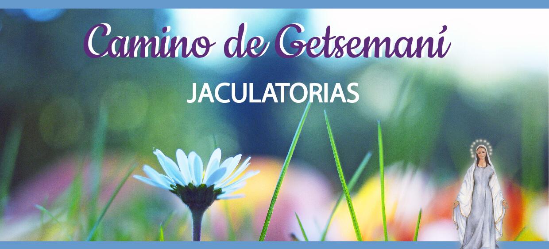 Jaculatorias